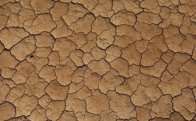 Żyzna pustynia